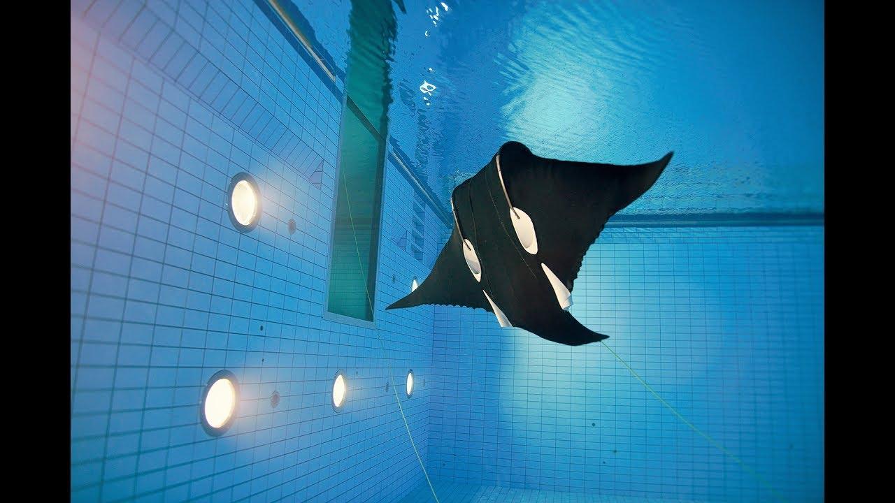 Роботы-скаты изучают подводные глубины