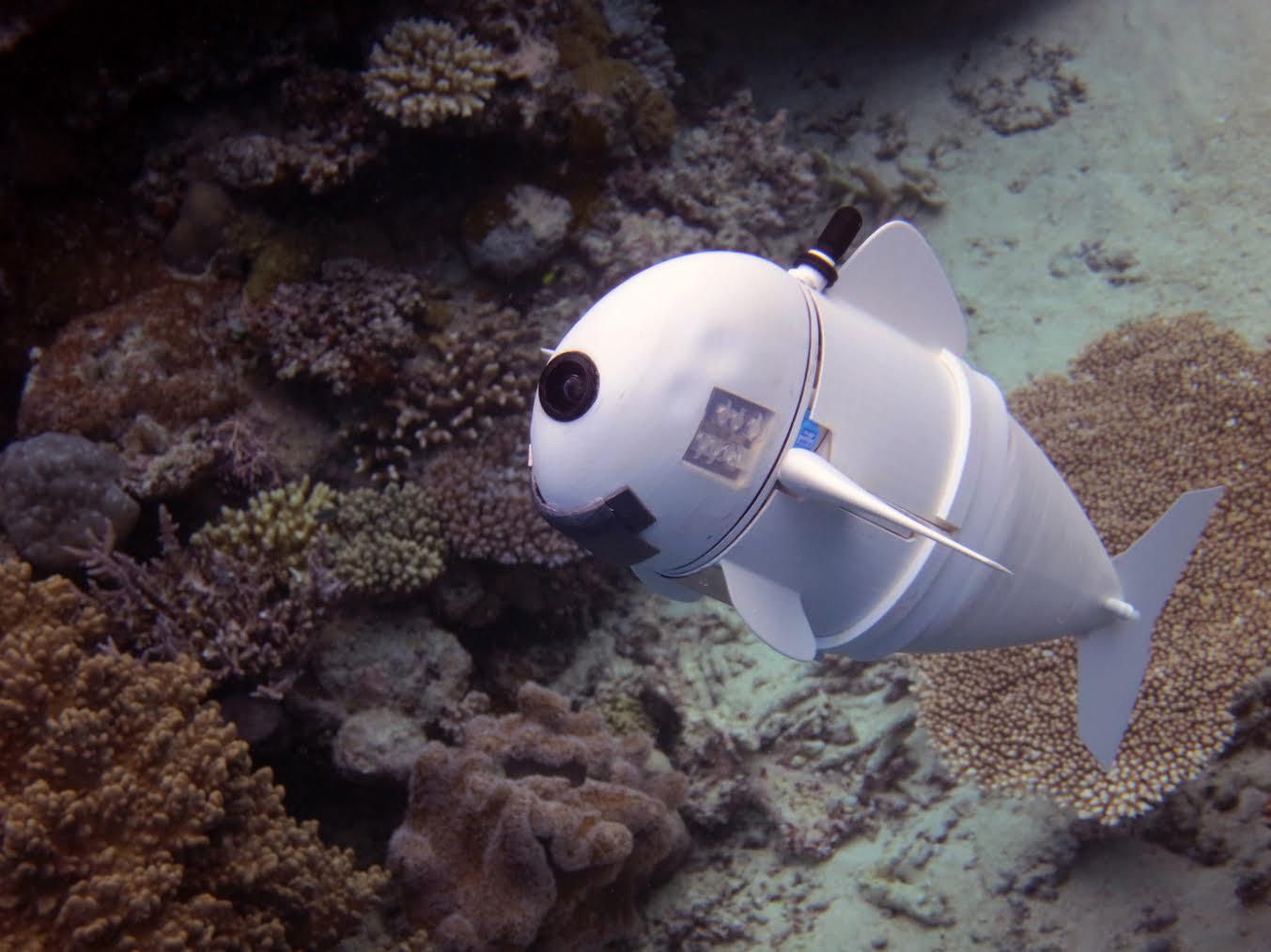 Робот-рыба как предвестник подводной обсерватории