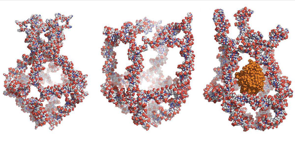 Нанороботы помогают в борьбе с онкологическими заболеваниями