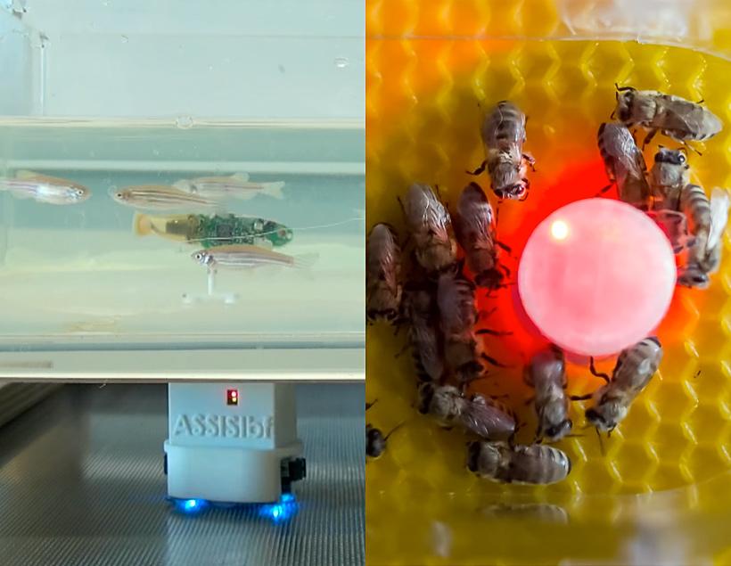 Роботы «переводчики» для пчёл и рыб